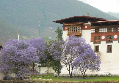 Dzong (fort) in Punakha, Bhutan